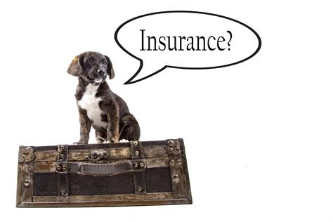 pet insurance quotes pet insurance quotes fast issue simplyinsurance co