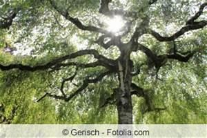 Kleine Bäume Für Vorgarten : kleinbaum und hausbaum kleine b ume f r den garten ~ Michelbontemps.com Haus und Dekorationen