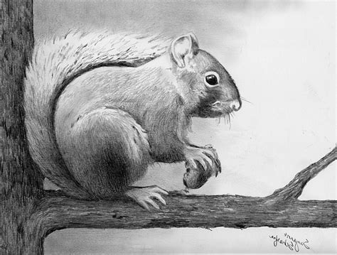 Awesome Animal Drawings Awesome Sketches Of Animals ...