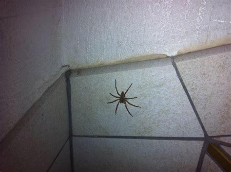 araignee dans la maison araignee dans une maison swyze