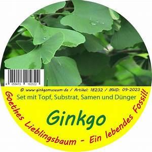 Ginkgo Samen Kaufen : ginkgosamen kaufen ~ Lizthompson.info Haus und Dekorationen