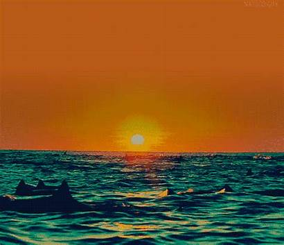 Animal Animated Sea Swim Dolphin Dolphins Animals