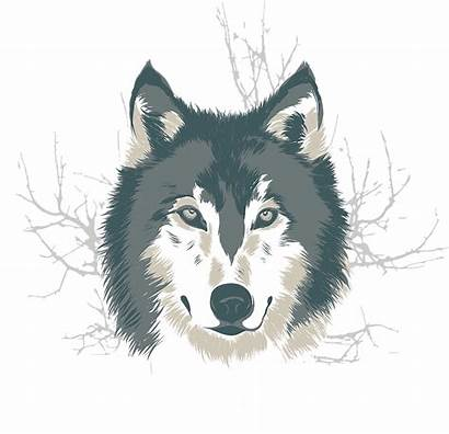 Wolf Illustration Drawings Wolves Vector Illustrations Cool