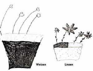 geschlechtliche vermehrung pflanzen