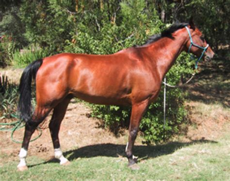 whats  ideal endurance horse conformation expert