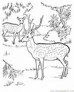 Deer In jungle coloring page - Free Printable Coloring Pages  Jungle Drawing With Animals