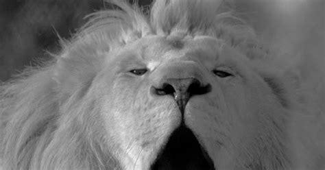 de natuur om je heen zwart witte leeuw