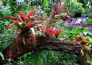Plants Of The Tropical Rainforest For Kids