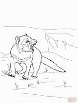 Devil Tasmanian Pages Line Colouring Coloring Drawings Australian Animals Google Drawing Wombat Animal Literacy Printable Clip Library Clipart Supercoloring sketch template
