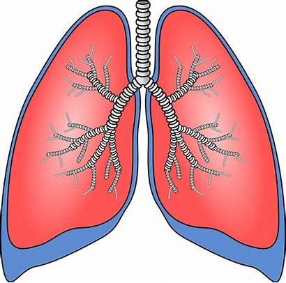 Lungs Pair Illustration