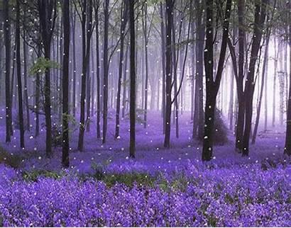 Purple Flowers Effort Takes Lavender Flower Forest