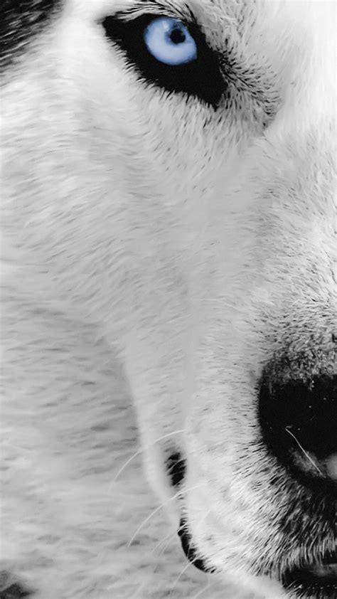 wolf iphone wallpaper wolf wallpaper for iphone 72 images