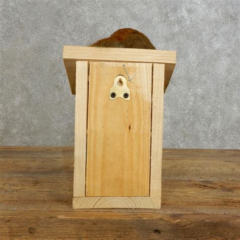 red squirrel birdhouse mount for sale 17198 the