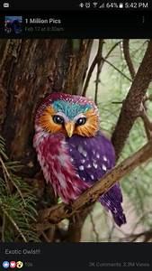 Rainbow, Owl, Sooooooo, Pretty