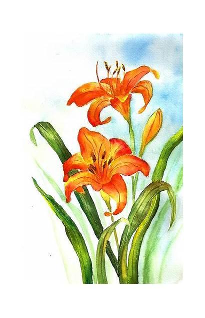 Daylily Clipart Hemerocallis Drawing Orange Clipground Site