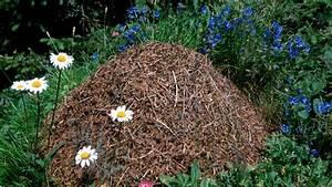 Ameisen Im Garten : ameisenh gel und andere nester so leben ameisen ~ Frokenaadalensverden.com Haus und Dekorationen