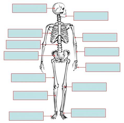 human skeleton to label defenderauto info