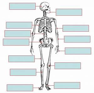 Human Skeleton To Label  U2013 Defenderauto Info