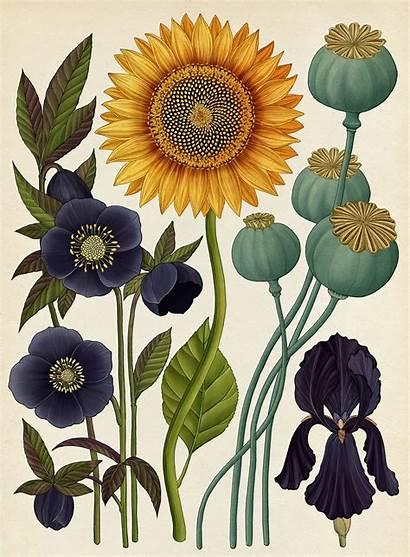 Katie Scott Illustrations Biology Illustration Inspiration
