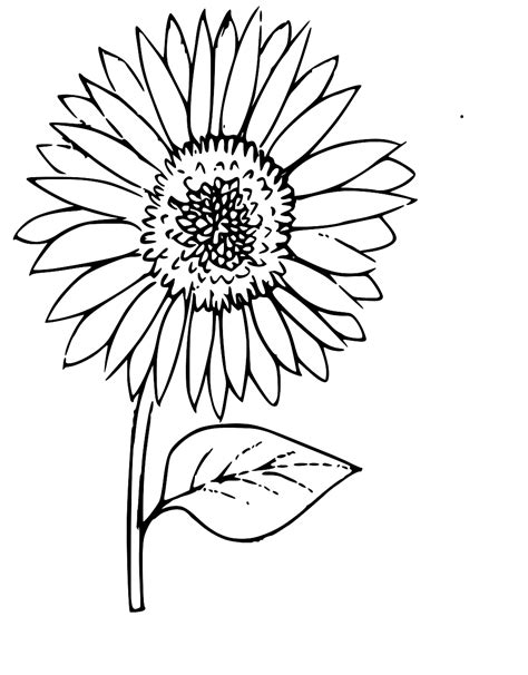 svg sunflower coloring outline flower  svg image