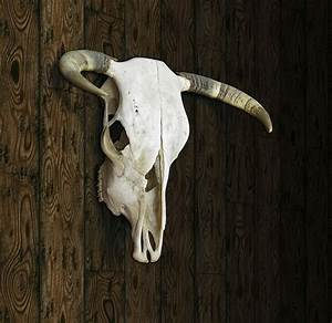 Cow Skull Digital Art By James Larkin