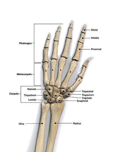common orthopedic injuries
