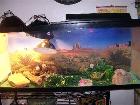 le uv terrarium tortue accessoires l importance de l 233 clairage dans un terrarium pour reptiles animogen