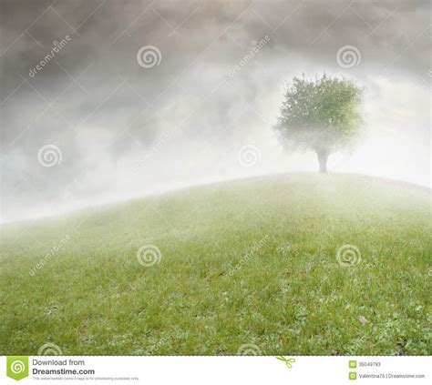 Tree On A Hill Stock Image. Image Of Concept, Isolated