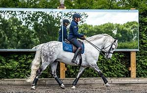 Arena mirrors: why they could help improve your horse's ...