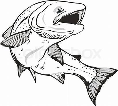 Fisk Tegning Google Fish