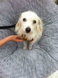 Zoe39s Friends Animal Rescue HOORAY I39M ADOPTED276