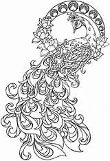 Peacock Coloring Adult Pages Printable Adults Peacocks Tattoo Colouring Nouveau Outline Feather Feathers Paisley Pretty Drawing Pattern Phoenix Animal Animals sketch template