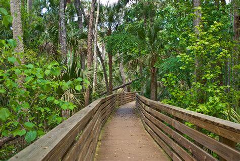 Hammock Area by Black Hammock Wilderness Area Florida Hikes
