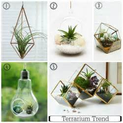 designer terrarium embrace the terrarium trend indoor gardening made easy fresh design