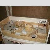 Robo Dwarf Hamster Cages | 736 x 552 jpeg 56kB