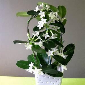 Plante Verte D Appartement : plante verte d appartement avec fleur blanche la pilounette ~ Premium-room.com Idées de Décoration