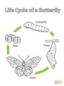 Life Cycle Butterfly Printable Coloring Pages