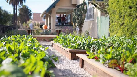 Can Urban Farming Combat Food Waste? Chatting With The
