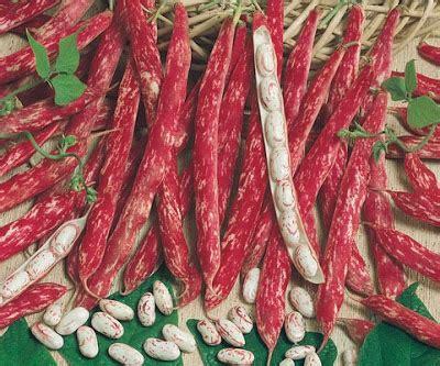 cuisiner des haricots rouges amapbdm dans votre panier du mardi 15 septembre