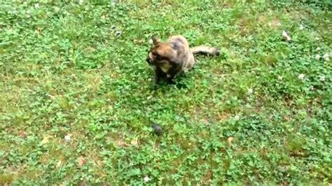 mole cat vs battle