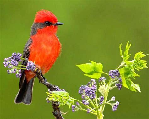 File Red Bird Hqfxjpg » Samuel Buzzetta » 1280x1024px