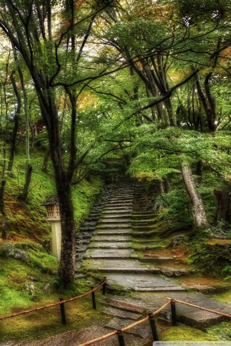 paths   tangled japanese forest  hd