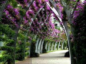 Photo Flowers Nature Flower Garden Image On ...