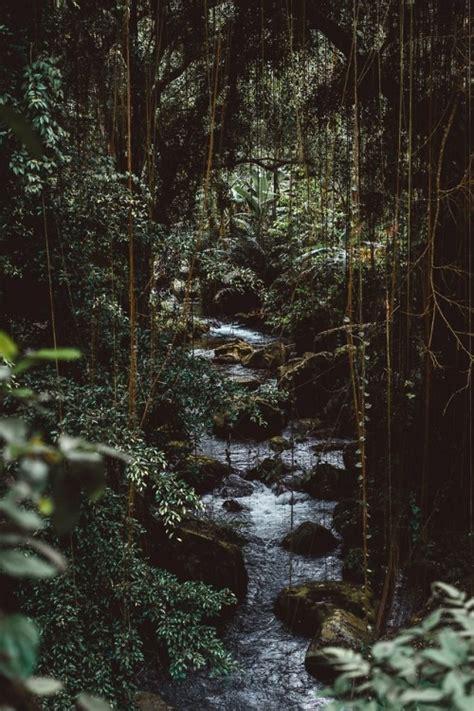 rainforest aesthetic tumblr