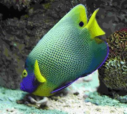 Fish Tropical Desktop Colorful Wallpapersafari Background Wallpapermine