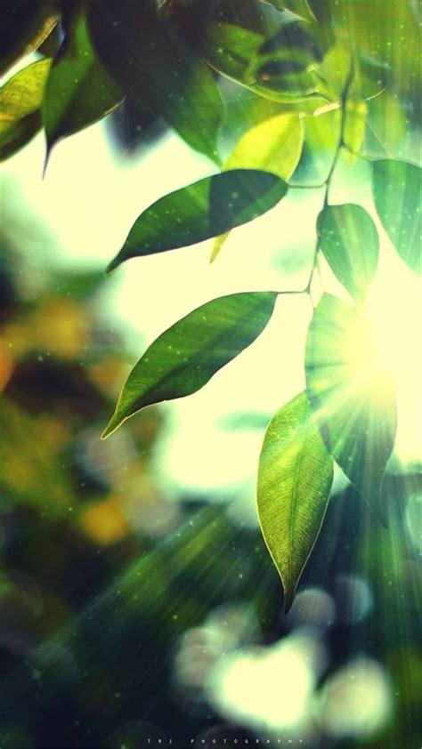 Sunshine Bokeh Leafy 1080x1920 hd wallpaper - android