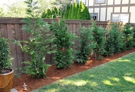 fast growing trees for privacy fast growing trees for privacy gardening and outdoors