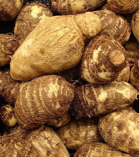 meilleur marque de cuisine photo le tubercule de taro ou chou chine est un ingrédient très utilisé dans la cuisine de