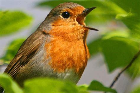 Vogelwelt Im Eigenen Garten Kleiber by Stunde Der Gartenv 246 Gel Nabu Nrw