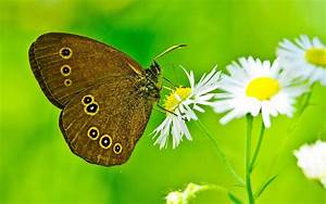 The splendid spring butterfly photography wallpaper 16 ...